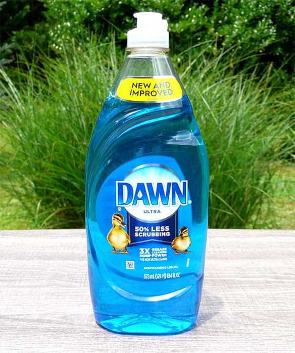 will dawn dish soap kill fleas