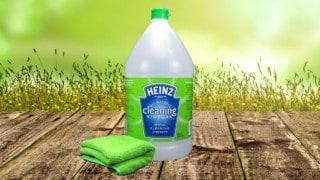 gallon of Heinz Cleaning Vinegar