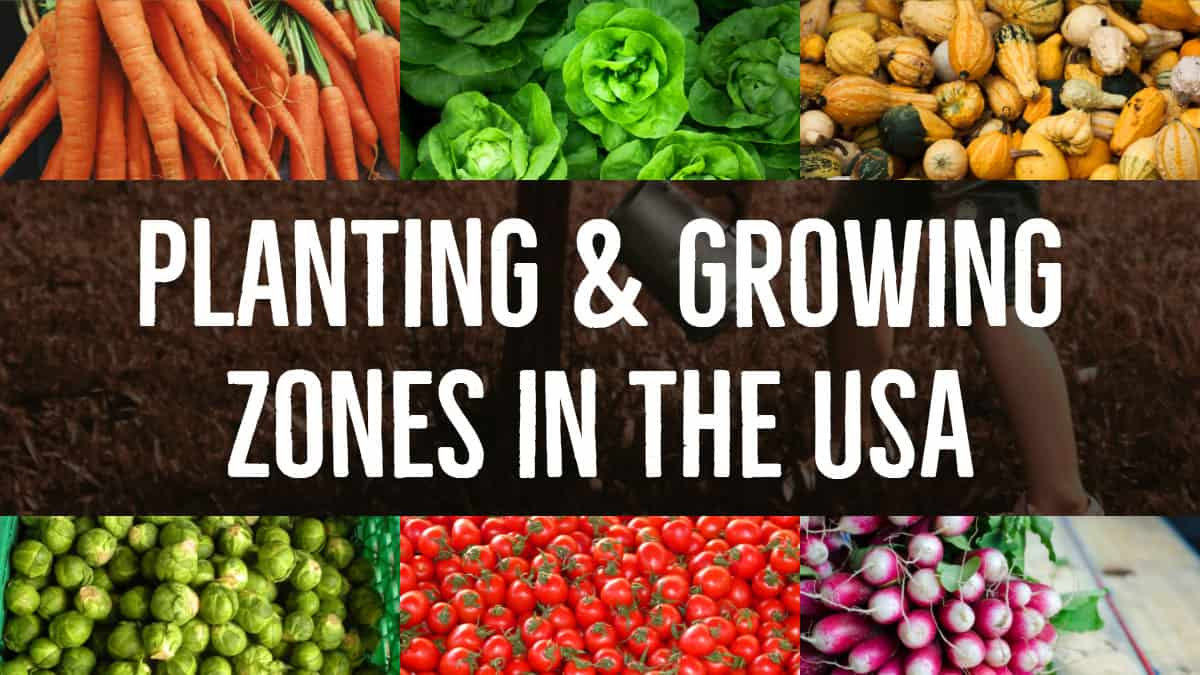 Planting & Growing Zones in the USA